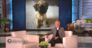 Ellen anuncia novo filhote em seu programa. (Foto: Reprodução / EllenTube)