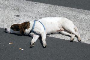 As bitucas possuem 25% da nicotina presente no cigarro e se engolidas podem causar envenenamento no pet. (Foto: Reprodução / Alamy)