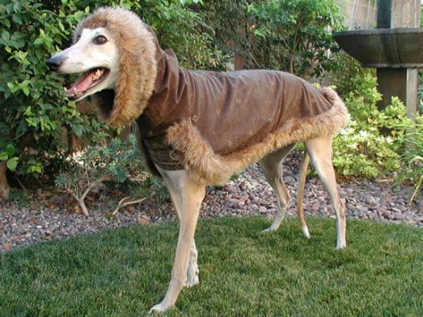 Greyhound (Foto: Reprodução / Bark Post)