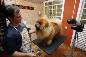 Todos os pet shops do Paraná devem filmar seus serviços de tosa e banho. (Foto: Reprodução / Gazeta do Povo)