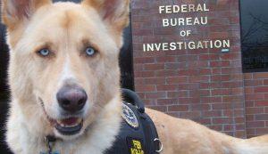 O FBI irá investigar os casos de maus tratos a animais nos EUA. (Foto: Reprodução / The Dodo)