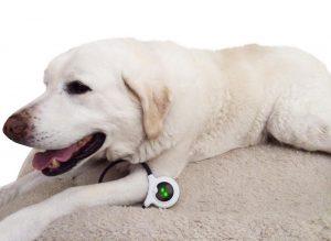 O laço pode ser usado em várias regiões do corpo do animal. (Foto: Reprodução / Assisi Animal Health)