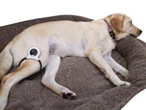 O produto pode ser usado por cães, gatos e até cavalos. Ele não causa dor e nem efeitos colaterais. (Foto: Reprodução / Assisi Animal Health)