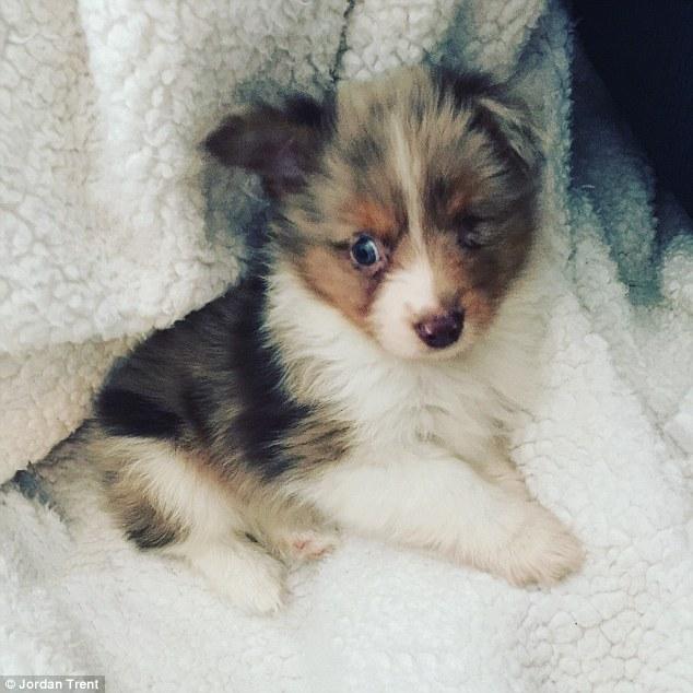 O cão Shiner havia sido rejeitado. (Foto: Reprodução / Daily Mail UK)