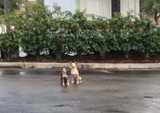 Os cães ficaram esperando pela volta do tutor. (Foto: Reprodução / Bark Post)