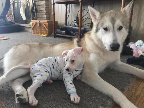 Uma linda amizade. (Foto: Reprodução / Bark Post)
