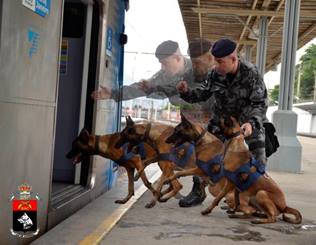 Sub Ten Medeiros iniciando as buscas com a cadela Nala. Foto: Alex Lopes.