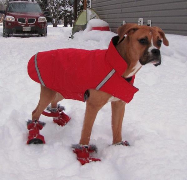 Boxer (Foto: Reprodução / Bark Post)