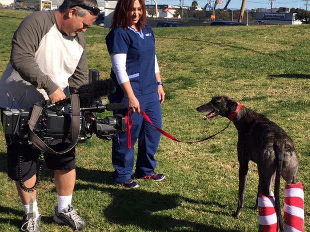 A história de Asha apareceu até na TV. (Foto: Reprodução / Facebook / Grehounds Adoption Center)