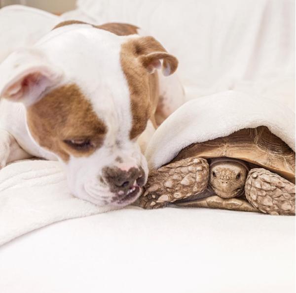 A cachorra Puka e a tartaruga macho Rocket Larry são irmãos de coração. (Foto: Reprodução / Instagram)