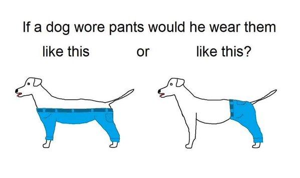 """Tradução: """"Se um cachorro usasse calça, ele usaria desse jeito ou deste?"""". (Foto:: Reprodução / Twitter / Jared Keller / Norbert)"""