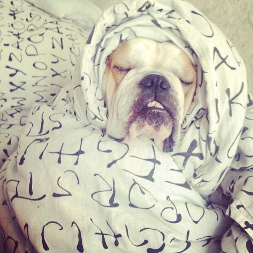 cachorro-dormindo-02