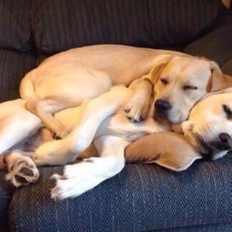 cachorro-dormindo-05