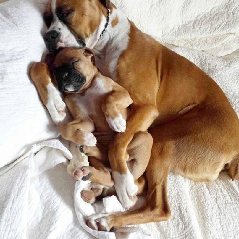cachorro-dormindo-08