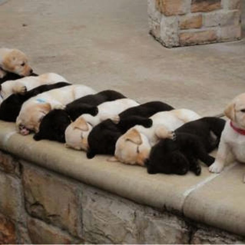 cachorro-dormindo-12