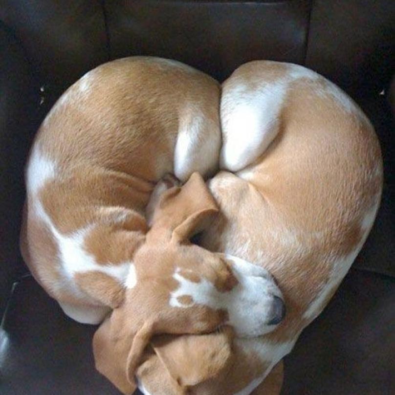 cachorro-dormindo-18