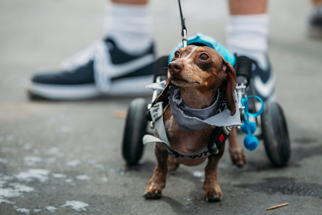 Todo cachorro é especial e merece ser amado! (Foto: Reprodução / Bark Post)