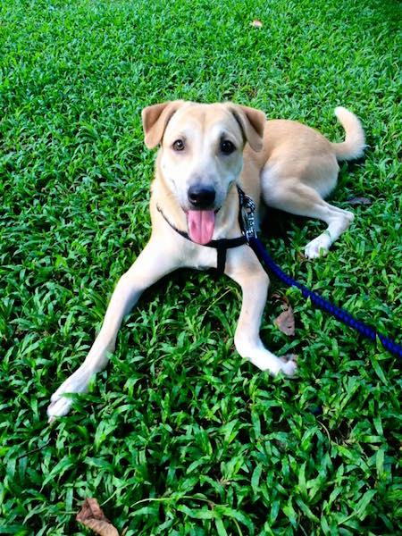 É nítida a felicidade do cachorro. (Foto: Reprodução / Facebook)