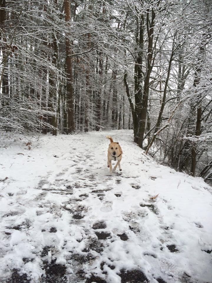 Buddy também adorou a neve! (Foto: Reprodução / Facebook)