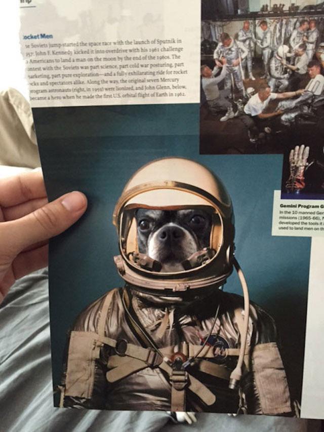 Rosie como uma astronauta. (Foto: Reprodução / Bark Post / Jay Riggio)