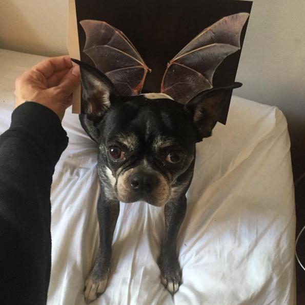 Fantasia de morcego. (Foto: Reprodução / Instagram / Jay Riggio)