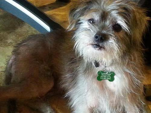 Nate se tornou o novo cachorrinho dos pais de George Clooney. (Foto: Reprodução / LuvForMutts Animal Rescue)