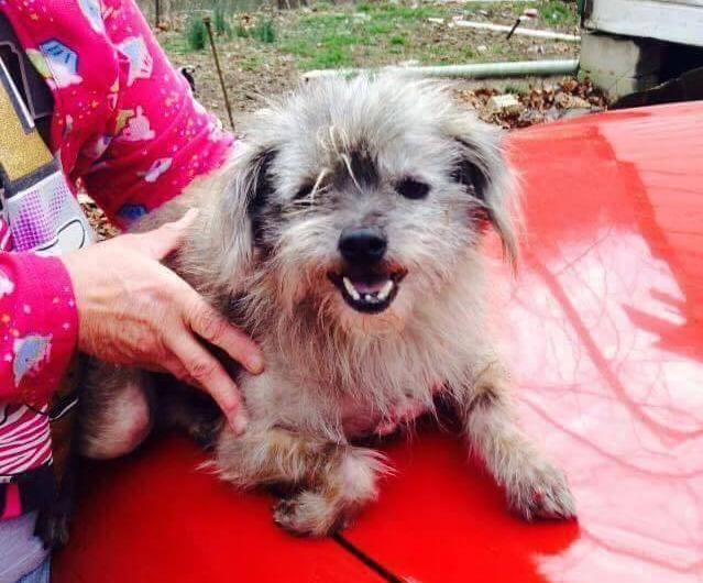 Essa foto mostra Nate assim que foi resgatado pela ONG. (Foto: Reprodução / LuvForMutts Animal Rescue)