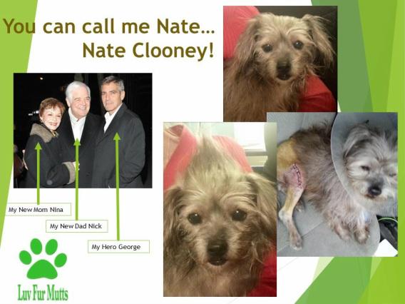 A história da adoção do cão Nate se espalhou pelo mundo. (Foto: Reprodução / LuvForMutts Animal Rescue)