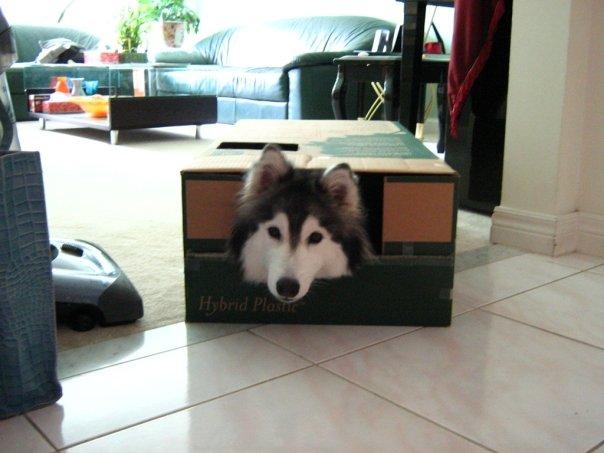 cachorro-ou-gato-02