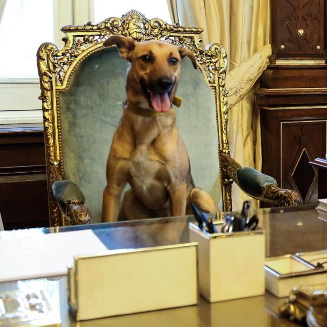 Cachorro Balcarce na cadeira presidencial da Argentina. (Foto: Reprodução / Facebook / Mauricio Macri)