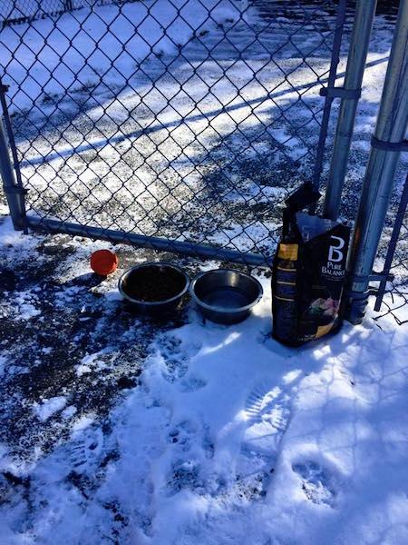 Local onde o cão foi abandonado. (Foto: Reprodução / Facebook / Parsippany Police Department)