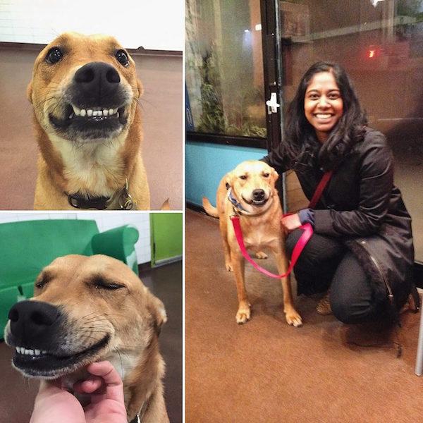 Alex Watson não conseguia parar de sorrir depois de ser adotado. (Foto: Reprodução / Facebook / Badass Brooklyn Animal Rescue)