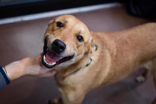 Alex Watson sempre foi um cão sorridente. (Foto: Reprodução / Facebook / Badass Brooklyn Animal Rescue)