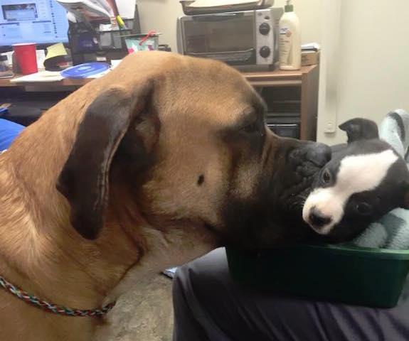 Uma amizade pra vida toda. (Foto: Reprodução / Facebook / Second Chance Rescue)