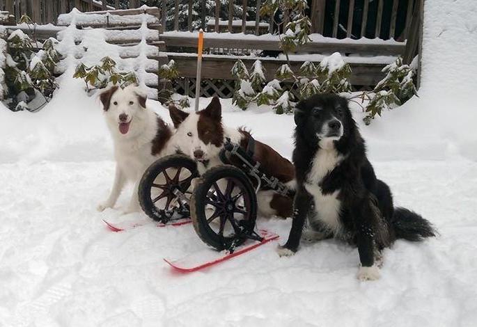 Isadore (esquerda), Roosevelt (meio) e Coalby (direita). (Foto: Reprodução / Facebook)
