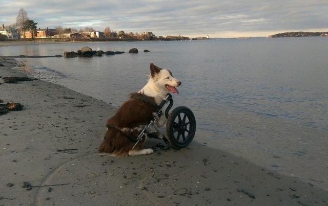 O cão adora brincar. (Foto: Reprodução / Facebook)