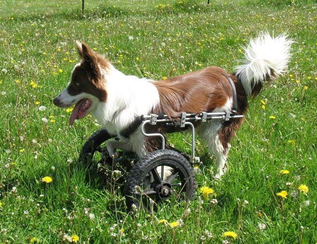 Roosevelt ganhou uma cadeira de rodas para conseguir se locomover sozinho. (Foto: Reprodução / Facebook)