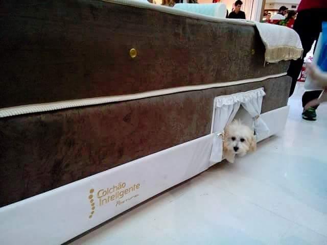 Compartimento especial para pets.  (Foto: Colchão Inteligente)