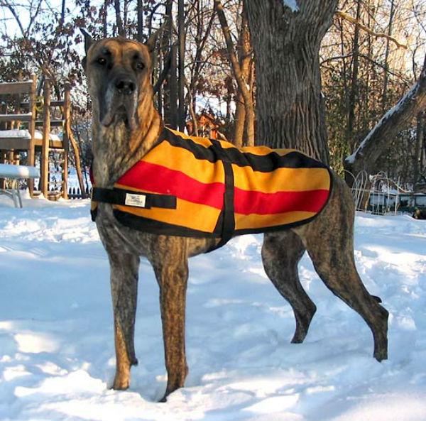 Dog Alemão (Foto: Reprodução / Bark Post)