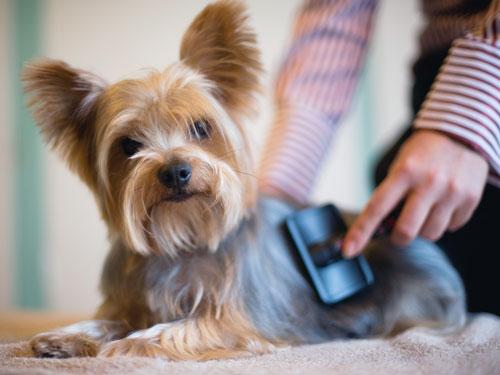 A escovação dos pelos dos cães tem grande importância. (Foto: Reprodução / Google)
