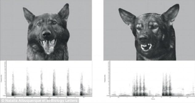 Durante o estudo, essas duas fotos eram mostradas aos cães. (Foto Ilustrativa: Reprodução  / Daily Mail UK)