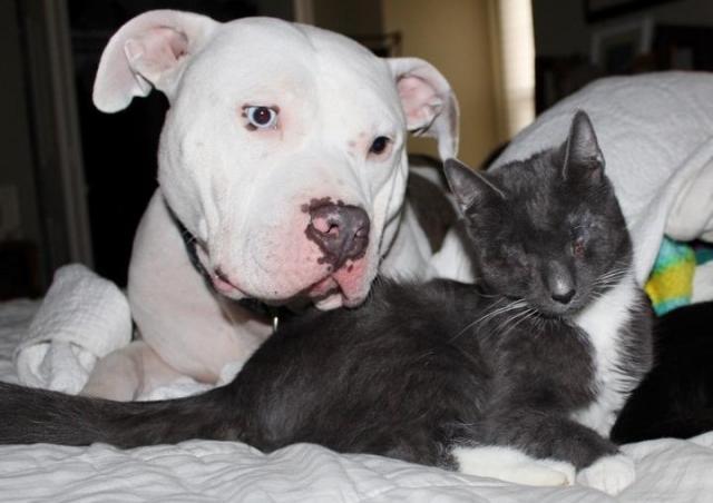 O cão Frankie com a gatinha Helen. (Foto: Reprodução / The Dodo)