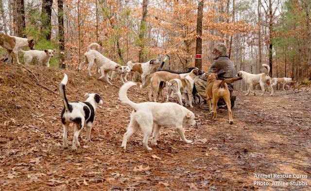 O homem vivia com 31 cães em uma floresta dos Estados Unidos. (Foto: Reprodução / Facebook / Animal Rescue Cops)