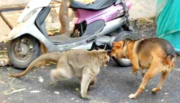 A mãe protege seu filho adotivo. (Foto: Reprodução / Bark Post)