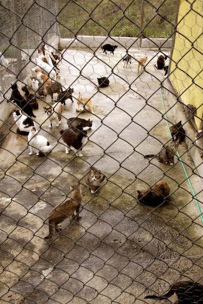 Alguns dos gatos que vivem sob os cuidados de Dochie. (Foto: Reprodução / Portal Litoral Norte)