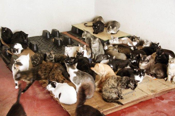Mais gatos que foram recolhidos das ruas. (Foto: Reprodução / Portal Litoral Norte)
