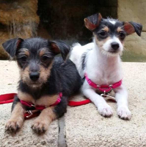 Em apenas duas semanas, Mona Art e Lisa Pop já cresceram! (Foto: Reprodução / Instagram)