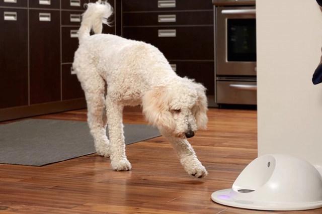 O primeiro console de jogos para cães. (Foto: Reprodução / CleverPet)
