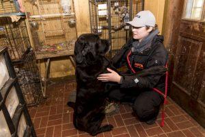 Foram retirados do local 700 animais. (Foto: Reprodução / ASPCA)