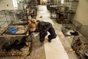 Cães e gatos viciam presos em gaiolas pequenas e enferrujadas. (Foto: Reprodução / ASPCA)